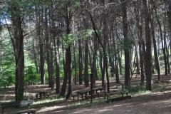 anchuelo-24-pinar-ermita-de-la-soledad