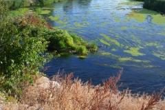 Exp.-Parque-Tierno-Galvan-rio-Jarama-2