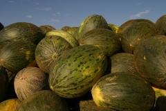 Melones-Villaconejos-2
